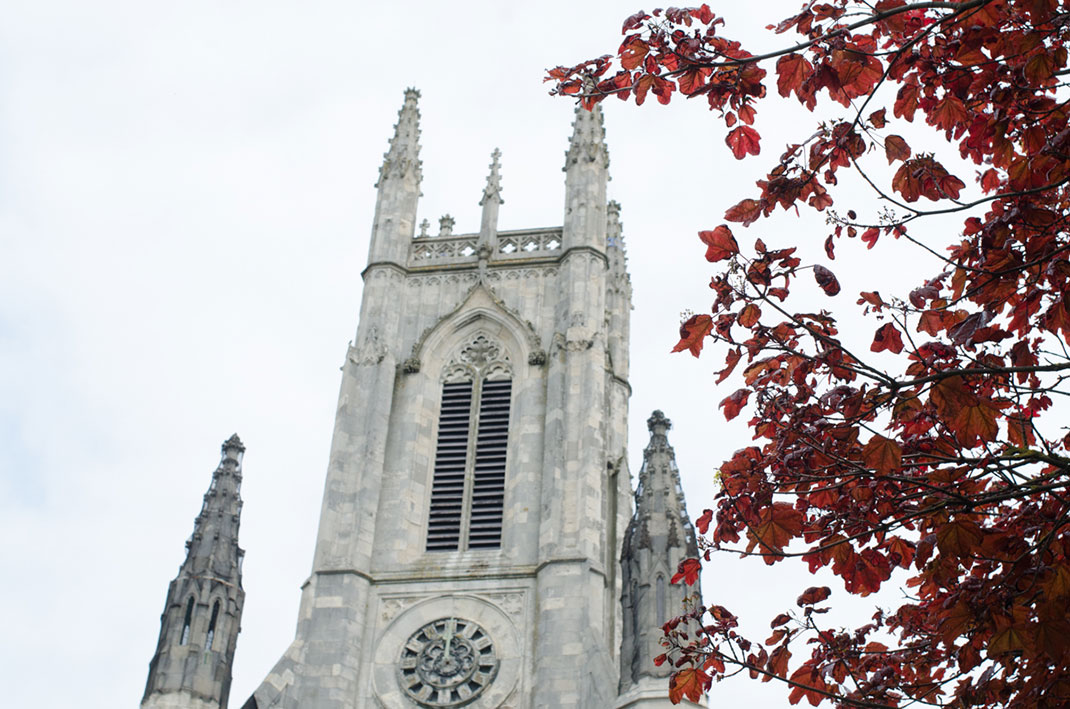St Peter's Church, Brighton, tree, leaves,