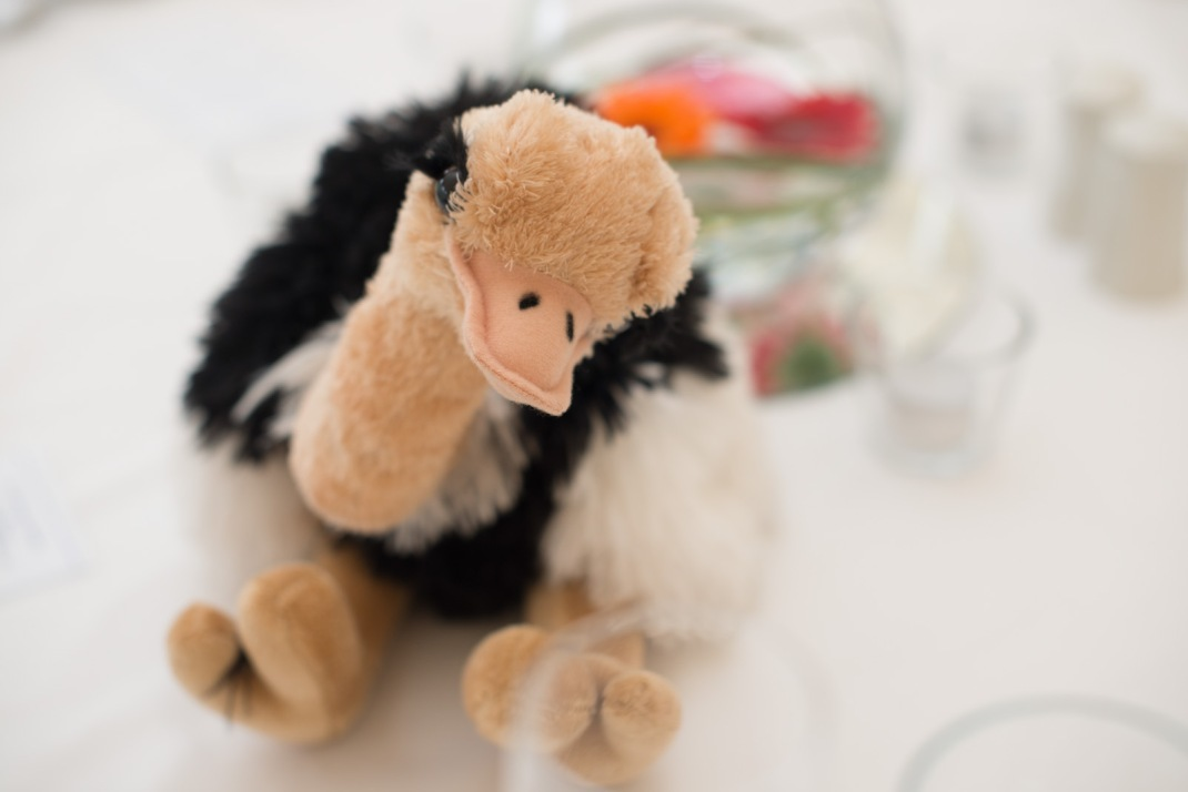 Ostrich, table setting, marquee, Marwell Zoo
