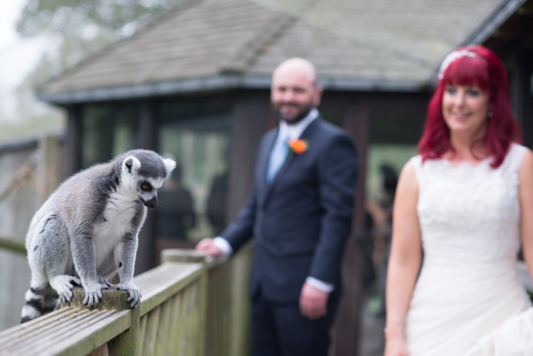 lemur, Marwell Zoo