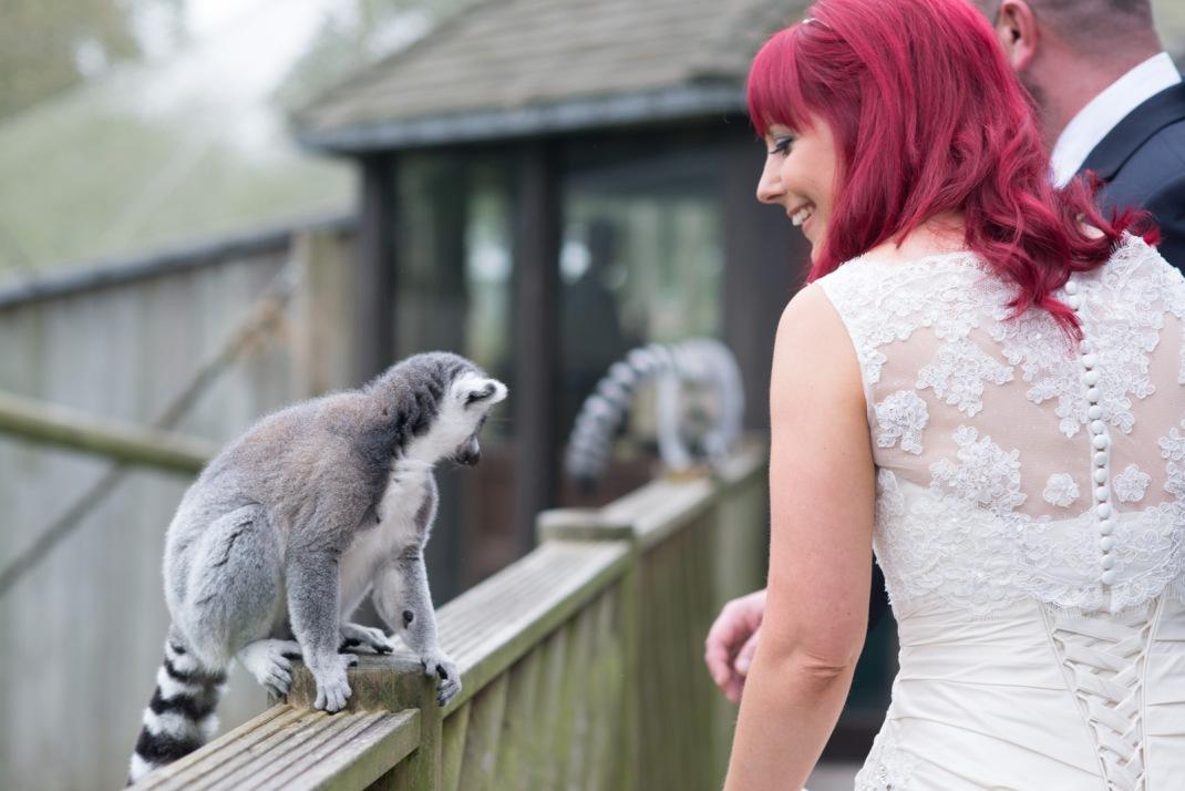 smile, lemur