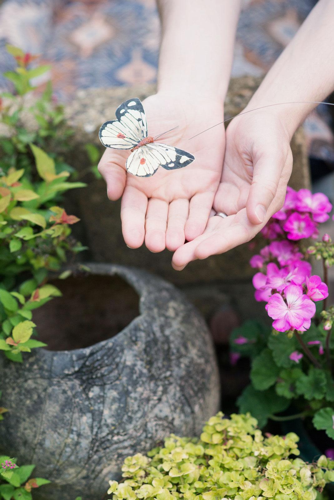 The Norfolk Terrace Garden, National Garden Scheme, butterfly