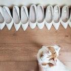 cat, funny, photobomb, shoes, wedding, bridal prep